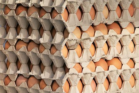 Markt-Eier