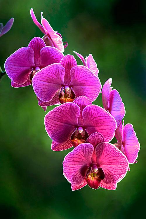 orchideen photoblog iso200